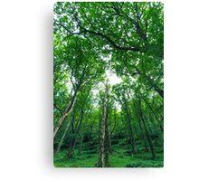 Woods, Glendalough, Co. Wicklow Canvas Print