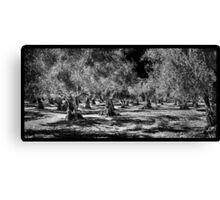 Grecian Olive Grove Canvas Print