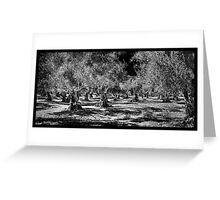 Grecian Olive Grove Greeting Card