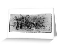 Vintage grecian olive grove Greeting Card