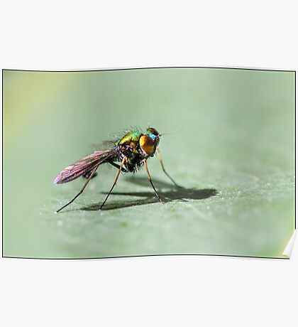 Fluro Fly Poster