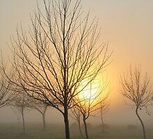 golden light of dawn by metriognome