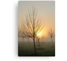 golden light of dawn Canvas Print