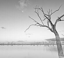 Beauty in Death by Malcolm Katon