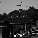 The Birds by lumiwa