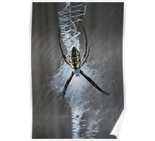 "Argiope aurantia ""writing spider"" revisited Poster"