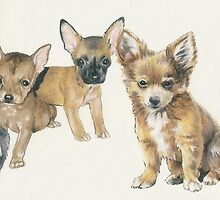 Chihuahua Puppies by BarbBarcikKeith