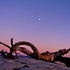 Ansel's Jeffrey Pine/Yosemite Ntnl. Park, Cal. by Nancy Richard