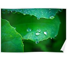 Water droplets on leaf Poster