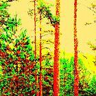 Sunny forest by Pauli Hyvönen