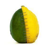 Lemon and Lime by caronjess