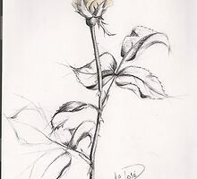 Yellow rose by Lavanda