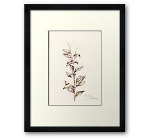 flower and stones Framed Print