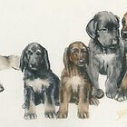 Afghan Hound Puppies by BarbBarcikKeith