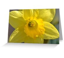 Flower6 Greeting Card