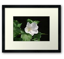 Butterfly on a Flower Framed Print