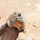 Squirrel in Grand Canyon by Elinor Barnes