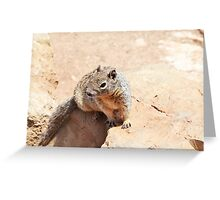 Squirrel in Grand Canyon Greeting Card