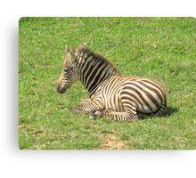 Wee Little Zebra ~ Canvas Print