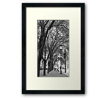 Tree Lined Walk Framed Print