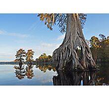 Dismal swamp grouping Photographic Print