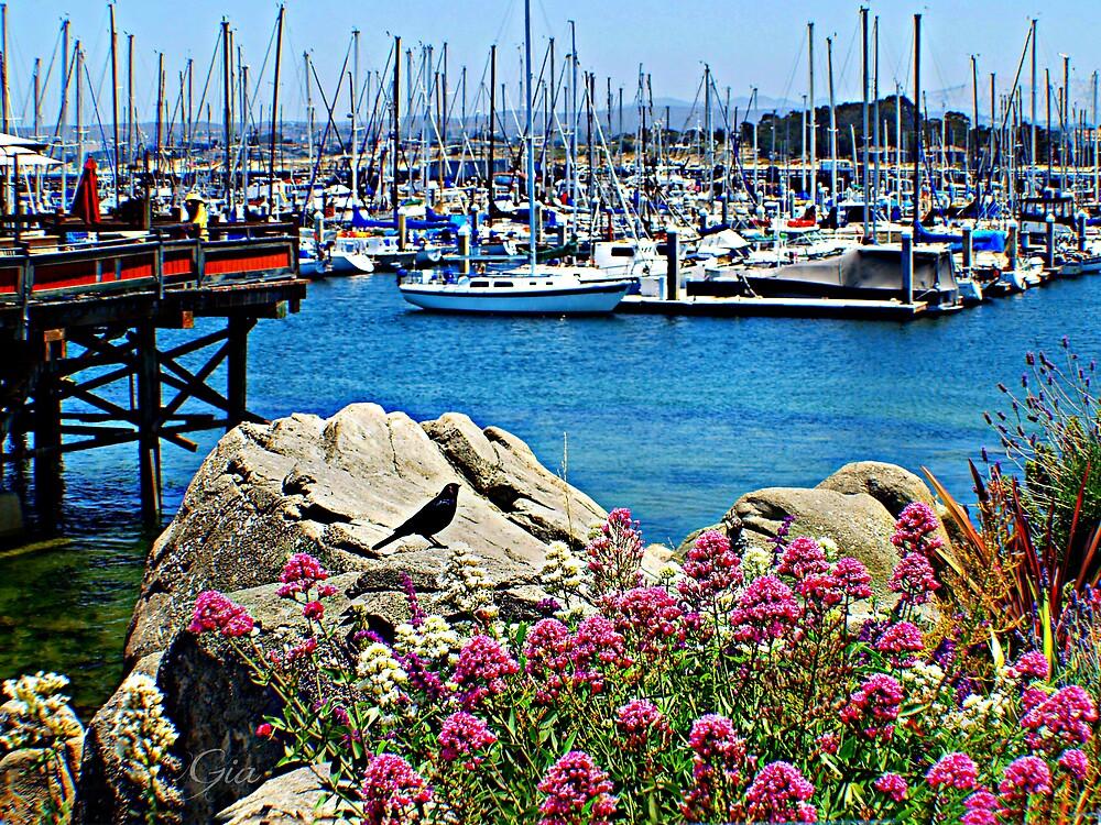 """""""Fisherman's Wharf"""" by Gail Jones"""