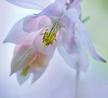 Floral Fantasy by Dianne English