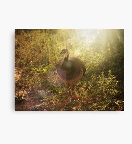 Peafowl Canvas Print