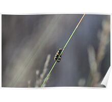 Wasp - Garden Path Poster