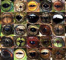 Frog eyes by Jodi Rowley