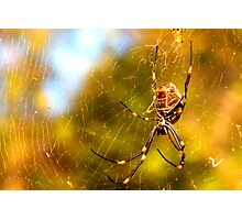 Golden Orb Weaver Photographic Print