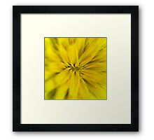 Bright yellow macro flower explosion Framed Print