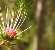 Native Flora by CassyIrene