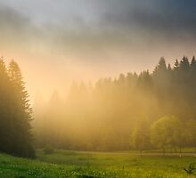 sun rays breaking through the clouds and fog in forests by pellinni