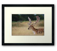 Deer 2 Framed Print