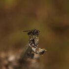 fly by Lavanda