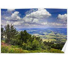 coniferous forest on a mountain slope Poster