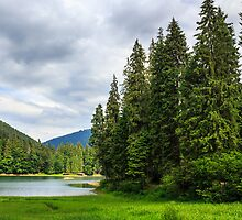 coniferous lake shore  in mountains by pellinni