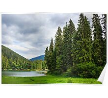 coniferous lake shore  in mountains Poster