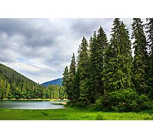 coniferous lake shore  in mountains Photographic Print