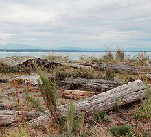 Boundary Bay by Tracy Friesen