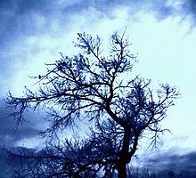 Crows Return.... by DoreenPhillips