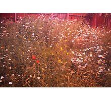 Urban Meadow - London Photographic Print