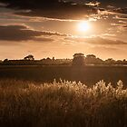 Sunset over Fields and Grasses by Chester Tugwell