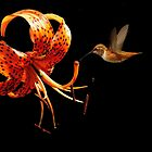 TIGER LILY AND HUMMINGBIRD by RoseMarie747