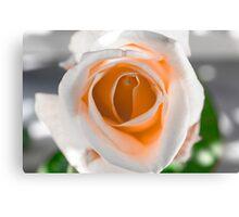 White N Orange Rose Canvas Print