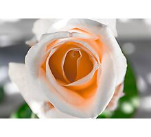 White N Orange Rose Photographic Print
