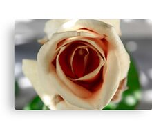 White and Red Rose Canvas Print