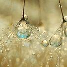 Golden Sparkles by Sharon Johnstone