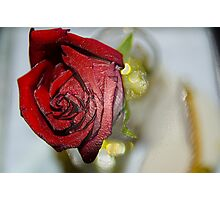 Red Beauty Photographic Print